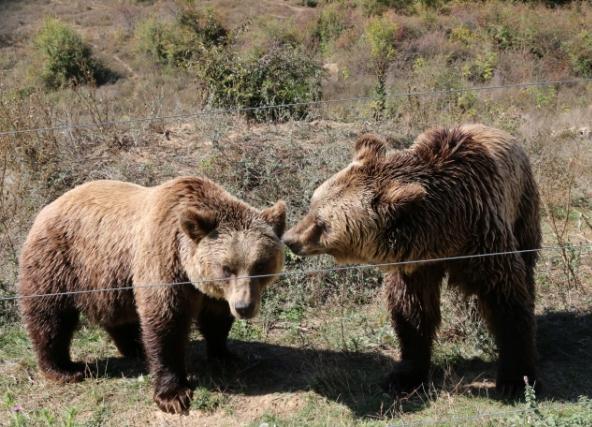 Medvjedi ilegalno držani u kavezima