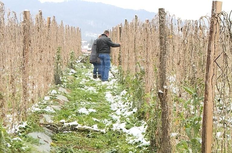 Poljoprivrednici traže i zaštitu domaće poizvodnje