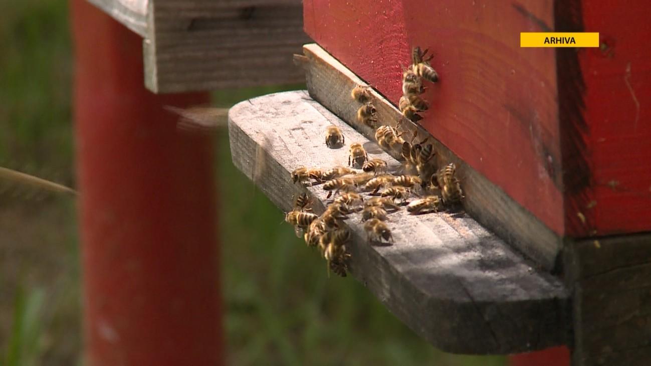 PČELE I PČELARSTVO NA UDARU KLIMATSKIH PROMJENA: PRETPOSTAVKE UPUĆUJU NA OVOGODIŠNJI PAD U PRINOSIMA MEDA DO 80 PROCENATA