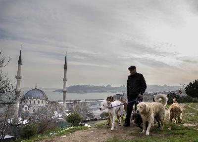 Kozat kroz najprometnije istanbulske ulice šeta devet pasa