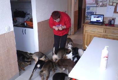 Milena brine o još 170 pasa