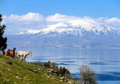Divlji konji sa planina silaze samo u određenom periodu