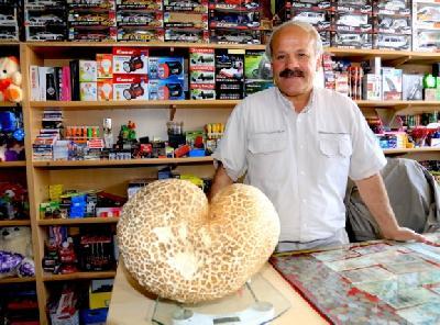 S obzirom na svoju veličinu, gljiva privlači pažnju brojnih prolaznika