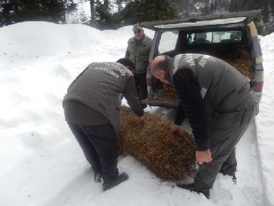Hrana za divlje životinje da lakše prežive hladne zimske dane