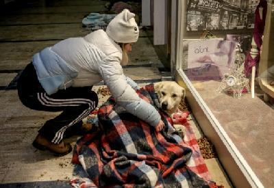 Nekolicinu promrzlih pasa građani sklonili sa hladnih ulica