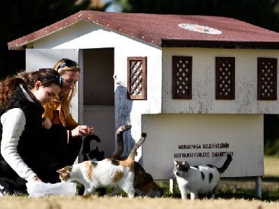 Ulične mačke u turskoj Antaliji više nisu bez skloništa