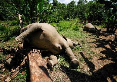 Slonovi došli u kontakt s električnom ogradom u šumi