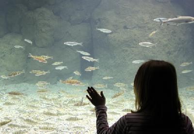 U akvariju oko 10.000 riba iz različitih dijelova svijeta