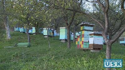 OPASNE I KORISNE: LOKALNE ZAJEDNICE BEZ PRAVILNIKA KOJI DEFINIŠE USLOVE I NAČIN DRŽANJA PČELA