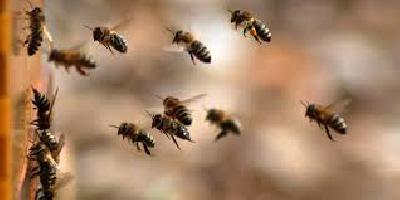 I PČELE LETE U JAVNU RASPRAVU:  U PROCEDURI PRAVILNIK O NAČINU  I USLOVIMA DRŽANJA PČELA