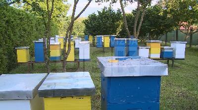 LOŠA GODINA ZA PČELARE REZULTIRALA POVEĆANJE CIJENE MEDA