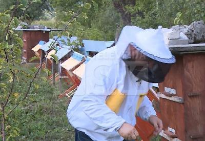 Pčelari traže veće subvencije