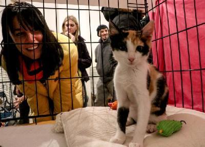 Privremene starateljke mogu birati gdje će maca biti udomljena
