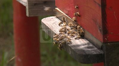 KAO PČELE RADILICE: VRIJEDNI KRAJIŠKI PČELARI U BORBI PROTIV SVAKOVRSNIH NEPRILIKA
