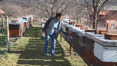 BIHAĆKIM PČELARIMA PODIJELJENE POGAČE ZA PREHRANU PČELA, KUPLJENJE SREDSTVIMA GRADA BIHAĆA