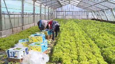 POLJOPRIVREDA I PROLJETNA SJETVA: PANDEMIJA POREMETILA PLANOVE OVDAŠNJIH FARMERA