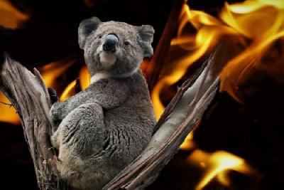 ZASTRAŠUJUĆE: U AUSTRALSKIM POŽARIMA STRADALO GOTOVO TRI MILIJARDE ŽIVOTINJA