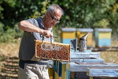 HERCEGOVAČKI PČELARI PLANIRAJU PRODAVATI PČELINJI OTROV, KILOGRAM KOŠTA DO 20.000 EURA
