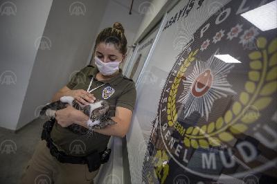 TRI MAČKE POSTALE SVOJEVRSNE MASKOTE POLICIJSKE UPRAVE U ANTALIJI